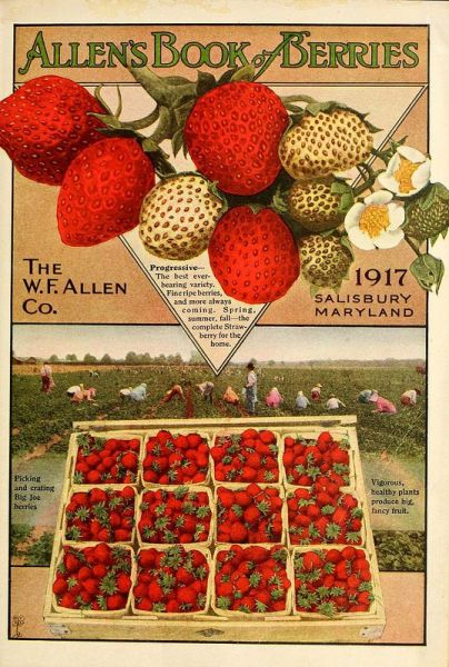 From 'Allen's Book of Berries'